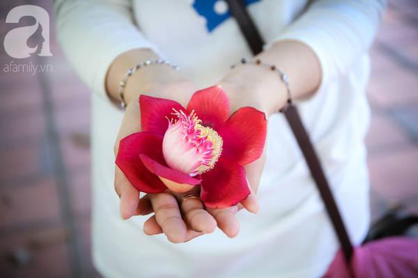 Ghé Huế, vào chùa Thiên Mụ 400 năm tuổi ngắm những đóa sala - hoa của sự yên lành - Ảnh 10.Hoa sala to gần bằng một bàn tay con gái và có 6 cánh.