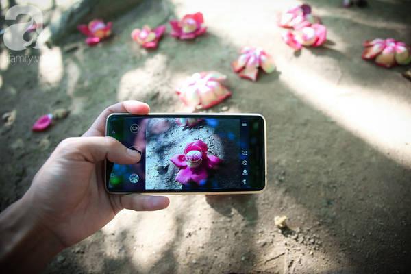 Bất kỳ ai đến Chùa Thiên Mụ đều trầm trồ trước vẻ đẹp của loài hoa này.