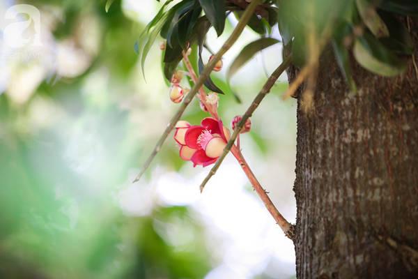 Cái tên Vô Ưu của hoa xuất phát trong quan niệm của Phật giáo.
