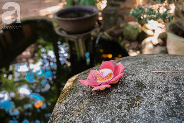 Càng về tối, hoa sẽ càng tỏa hương thơm.
