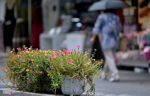 Nhiều chậu hoa được đặt ngay giữa con phố, tạo cảm giác yên bình và giảm bớt nắng nóng.