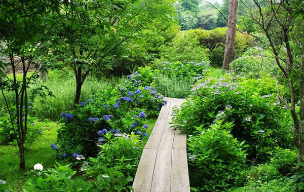 Một điểm đến xanh mát khác của tỉnh Oita, vùng Kyushu vào mùa hè là công viên hoa Kujyu. Nơi đây hiện trồng hơn 500 loài hoa khác nhau, tạo thành những thảm lớn. Các loại tulip khoe sắc vào mùa xuân, oải hương, cẩm tú cầu vào mùa hè, hoa cúc cosmos vào mùa thu và rất nhiều loại cây xanh khác. Bên cạnh tham quan các vườn hoa, du khách còn có thể mua sắm tại những cửa hiệu lưu niệm, thư giãn ở các quán cà phê hay ăn uống tại nhà hàng bên trong công viên.