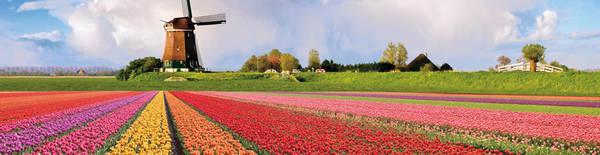 Cánh đồng hoa tulip (Hà Lan): Nếu đến thăm Hà Lan, bạn nên đến vào mùa xuân và đừng quên ghé thăm làng Beemster, cách thủ đô Amsterdam 30 km về phía bắc để đắm mình trong muôn sắc hoa tulip. Những bông hoa đủ sắc màu phủ trên một không gian rộng lớn, cùng những cối xay gió tạo nên khung cảnh lãng mạn. Ảnh: The White Rabbit.