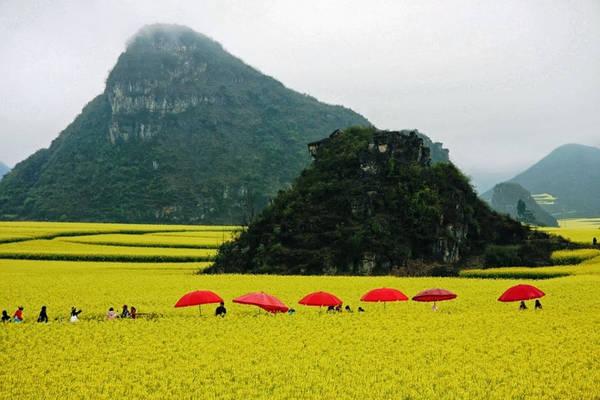 Cánh đồng hoa cải ở Trung Quốc: Mỗi năm một lần, các cánh đồng của huyện La Bình, tỉnh Vân Nam lại như được khoác một tấm áo vàng rực rỡ nhờ hoa của những cây cải dầu. Cải dầu nở hoa vào mùa xuân, thời điểm từ giữa tháng 2 đến tháng 4 hàng năm. Đây cũng là khoảng thời gian huyện La Bình đón nhiều du khách và các nhiếp ảnh gia đến tác nghiệp. Ảnh: Resultado/Pinterest.