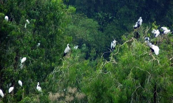 Toàn cảnh vườn chim Thung Nham