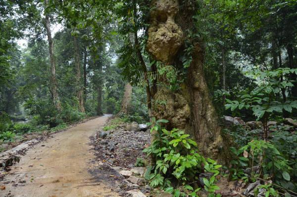 Trong rừng hoang sơ