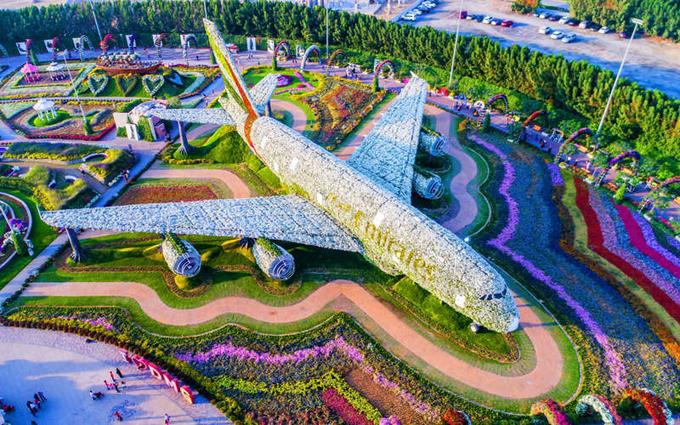 Vườn hoa Dubai Miracle còn là nơi du khách tìm thấy mô hình hoa lớn nhất thế giới. Đó là bản sao của chiếc máy bay Airbus A380 của hãng hàng không Emirates được tạo nên từ hơn 500.000 bông hoa tươi và nhiều loài cây. Khi những bông hoa nở rộ, toàn bộ máy bay này có thể có tới gần 5 triệu bông hoa. Ảnh: Dubai Miracle Garden.