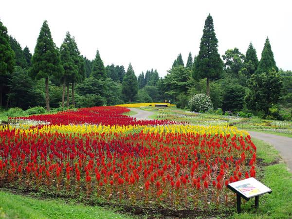 Công viên hoa Kujyu Nơi đây hiện trồng hơn 500 loài hoa khác nhau, tạo thành những thảm lớn. Hoa tulip khoe sắc vào mùa xuân, oải hương, cẩm tú cầu vào mùa hè, hoa cúc cosmos vào mùa thu và rất nhiều loại cây xanh khác. Du khách còn có thể mua sắm tại những hàng lưu niệm, thư giãn ở các quán cà phê hay ăn uống tại nhà hàng bên trong công viên. Ảnh: Hương Chi.