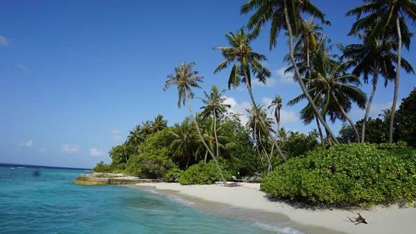 Dừa bên bờ biển trên đảo Bandos resort