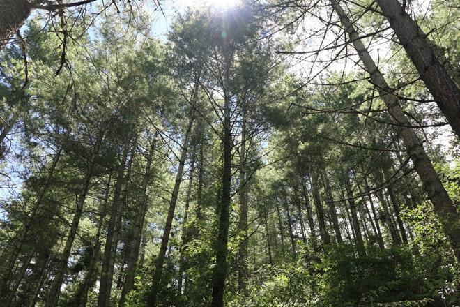 Người Bhutan coi trọng thiên nhiên, chặt cây là điều bị cấm và phạt nặng nếu vi phạm. Ảnh: Karen Lim.