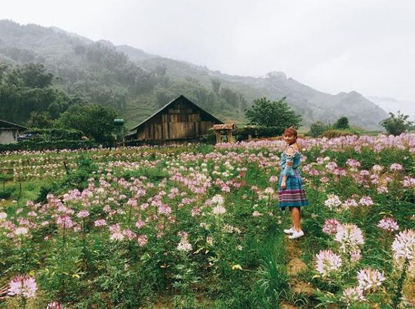 Phát hiện cánh đồng hoa hồng Ri đẹp ngất ngây ở Sapa - iVIVU com