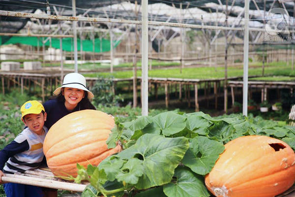 Hãy ngừng ô a hay nghi ngờ, những giống cây trồng ở làng nông nghiệp là đồ thật 100%.