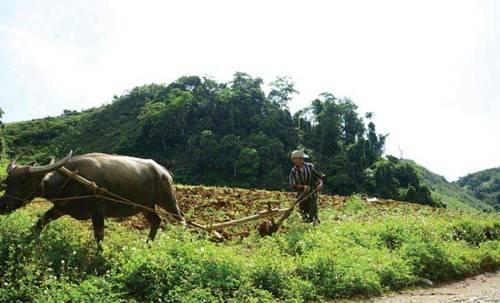 Nông dân vỡ đất, khai hoang để trồng trọt trên núi