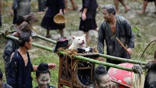Khác với người dân những vùng khác tại Trung Quốc, dân tộc Miao ở Quý Châu không ăn thịt chó. Trái lại, người Miao coi đây là loài vật linh thiêng do thánh thần gửi xuống hạ giới để giúp họ có mùa màng bội thu.