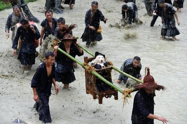 Theo truyền thuyết, khi những người Miao đầu tiên đi khai hoang lập nghiệp, một con chó đã dẫn họ tới nguồn nước thiêng. Nhờ thế mà cả bộ tộc không chết khát. Từ đó, hàng năm người Miao đều tổ chức lễ hội kiệu chó taigoujie như để cảm tạ thần thánh và cầu nguyện cho mùa màng năm sau.