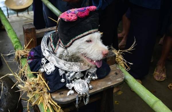 Một pháp sư đi trước dẫn đoàn, người dân kiệu chó đi theo, cùng múa hát và đánh trống.