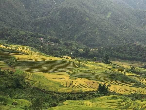 """Mường Hum ở Bát Xát cũng là điểm """"săn lúa"""" được yêu thích ở Lào Cai. Ảnh được phượt thủ Nguyễn Trung cập nhật ngày 3/9. Anh cho biết ở đây nhiều chỗ người dân đã gặt."""