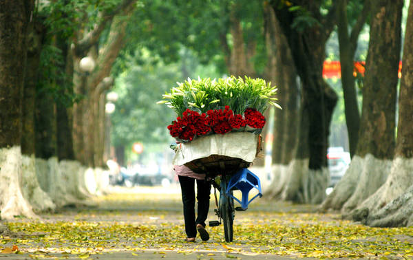 Hà Nội Sấu chín, hương thơm hoa sữa, hoàng lan là tín hiệu báo Hà Nội vào thu. Đây được coi là mùa đẹp nhất trong năm ở Hà Nội, khi nắng bớt gay gắt, trời dịu mát và nhiều món quà vặt như cốm, chả rươi, sấu dầm... Ảnh: Giang Trịnh.