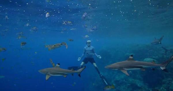 Hàng ngày, họ lặn biển với những thiết bị thô sơ để đánh bắt cá kiếm sống, vây xung quanh là đàn cá mập khổng lồ với nanh vuốt đáng sợ. Trong số đó là cá búa nhám và cá mập vi trắng đại dương - hai sát thủ luôn nằm trong top nguy hiểm nhất thế giới.