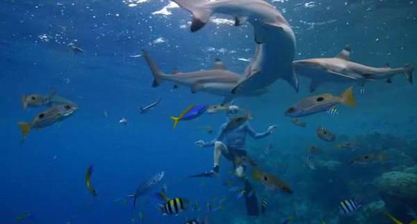 """""""Họ là những người có mối quan hệ gần gũi với cá mập nhất thế giới"""", Gordon cho biết.  Trong thế chiến thứ hai, một chiếc tàu có tên là Nova Scotia bị tàu ngầm Đức đánh chìm ngoài khơi Nam Phi. Một phần tư trong số 750 quân lính bị thiệt mạng đều do bị cá mập vi trắng đại dương tấn công. Loài vật này cũng liên quan tới một loạt vụ tấn công du khách ở khu du lịch Biển Đỏ, gần Sharm El Sheikh, Ai Cập năm 2010."""