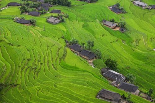 Năm ngoái lúa ở Hoàng Su Phì chín sớm vào tháng 9 thì năm nay muộn hơn so với các nơi khác. Theo các bạn trẻ đi phượt Hoàng Su Phì dịp lễ 2/9 vừa qua, lúa ở đây vẫn còn xanh, dự kiến sẽ vào mùa gặt khoảng tháng 10. Ảnh: Mạnh Phí.