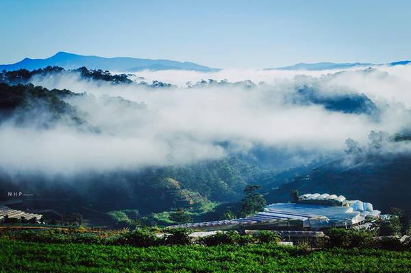 Cách trung tâm thành phố Đà Lạt khoảng 25 km, đồi chè Cầu Đất là điểm đến quen thuộc, ưa thích của nhiều bạn trẻ khi đến thành phố mù sương. Ngoài việc chiêm ngưỡng khung cảnh vừa yên bình, vừa hùng vĩ của đồi chè và vườn ươm có diện tích lên tới 220 ha. Thì một trải nghiệm thú vị dành cho du khách khi đến Cầu Đất là được thả hồn theo tiếng rì rào của rừng thông trên con đường thơ mộng dẫn đến nơi đây.