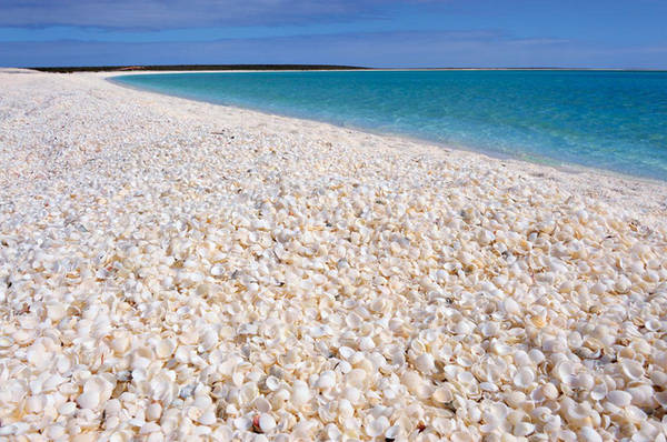 Bãi biển Vỏ Sò trải dài hơn 110km, bao phủ bởi một lớp vỏ sò dày tới 10m. Đây là vỏ của Fragum erugatum, một loại nhuyễn thể thuộc họ Cardiidae phân bố chủ yếu tại vùng biển ngoài khơi bang Western, Australia.