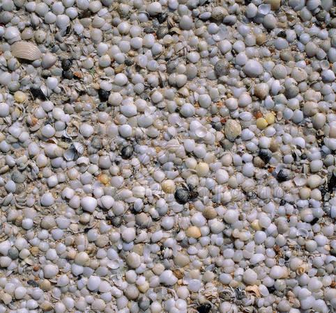 Vỏ sò nhiều đến mức chúng kết dính với nhau tạo thành một loại đá vôi đặc biệt gọi là coquina, được khai thác làm vật liệu xây dựng cho đến khi tổ chức UNESCO bảo vệ vào năm 1991.