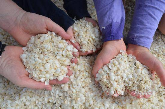 Ngày nay, vỏ sò vẫn được người Australia sử dụng trong chế biến thức ăn gia súc, gia cầm vì lượng canxi rất dồi dào, hoặc được dùng làm đồ thủ công mỹ nghệ, đồ lưu niệm bán cho du khách.