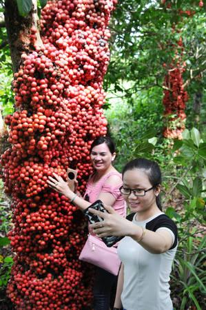 Bạn trẻ thích thú đến vườn chụp ảnh. Ảnh: Dương Thanh Xuân