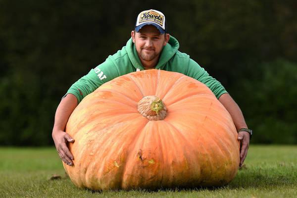 Richard Mann ôm trái bí ngô khổng lồ 310,7 kg, đây là trái lớn nhất giành chiến thắng trong một cuộc thi rau củ to được tổ chức tại Harrogate, Anh. Ảnh: Oli Scarff/AFP/Getty