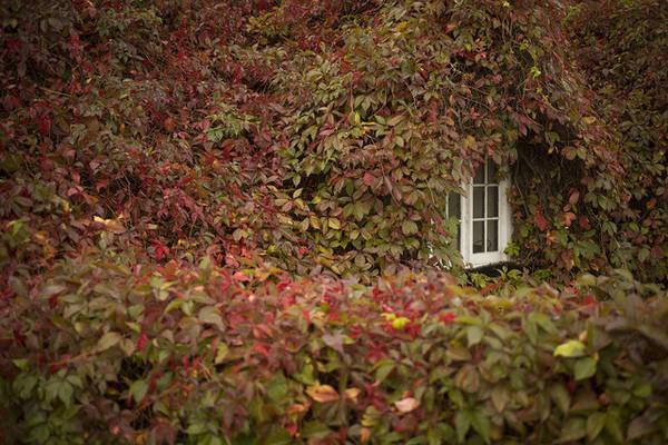 """""""Ô cửa mùa thu"""" tại Llandudno, xứ Wales. Ảnh: Christopher Furlong/Getty"""