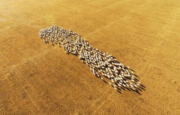 """Cánh đồng lúa bậc thang uốn lượn như tranh vào mùa thu hoạch ở thành phố Quý Dương, tỉnh Quý Châu. Tháng 10-11 là """"mùa vàng"""" thu hoạch lúa ở các tỉnh phía Nam Trung Quốc như Vân Nam, Quảng Tây, Quý Châu."""
