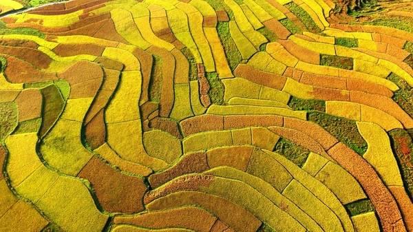Mùa thu cũng là mùa đàn gia súc đi tránh rét trước khi mùa đông giá lạnh kéo tới. Đàn gia súc di chuyển qua thảo nguyên vàng óng rộng mênh mông ở vùng Nội Mông mang tới hình ảnh thanh bình, giản dị.