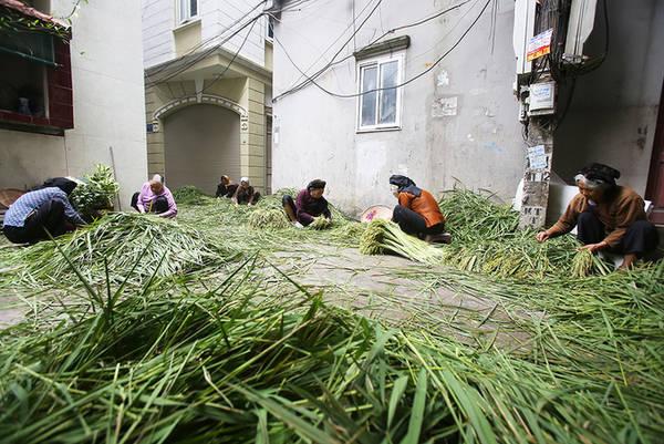 Bên cạnh làng cốm Vòng nổi tiếng, món ăn đặc trưng của mùa thu này còn xuất hiện ở Làng Mễ Trì (Từ Liêm, Hà Nội) với tuổi thọ hơn 100 năm nay.