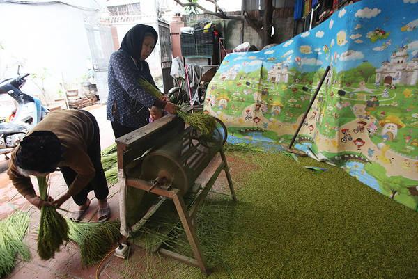 """""""Lúa sau khi tuốt được đãi bằng nước để lọc bỏ hạt lép. So với năm trước, năm nay thời tiết mưa nhiều, năng suất kém hơn. Gia đình có 7 sào lúa, năm nay mất mùa thu khoảng 1,2 tấn (năm 2016 đạt 1,6 tấn)"""", bà Lợi cho biết."""