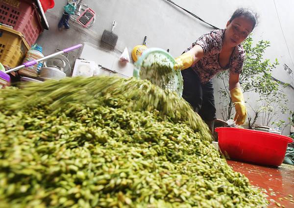 Ở Mễ Trì có nhiều gia đình làm đầu mối phân phối lúa tới các hộ dân nhỏ lẻ.