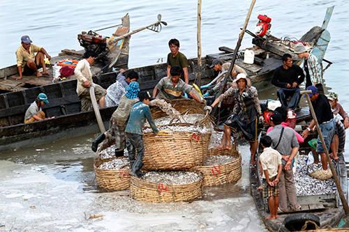 Có hai loại prahok cơ bản, prahok ch'oeung và prahok sach, nhưng đều được làm từ các loại cá, tùy địa phương. Ảnh: Combodia Daily.