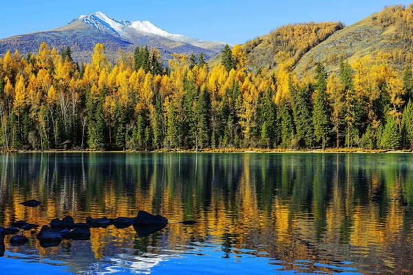 Ngay cả khi không phải trong mùa thu, hồ Kanas ở Tân Cương vẫn được xếp hạng 5 sao trong số các địa điểm cảnh đẹp của Trung Quốc. Ảnh: Dreamstime Vào mùa thu, rừng cây bạch dương trải một màu vàng mơ dọc từ dãy núi Altai đến bờ hồ Kanas. Phía xa, ở vùng ranh giới với Kazakhstan, Mông Cổ, và Nga là các ngọn núi phủ tuyết trắng.