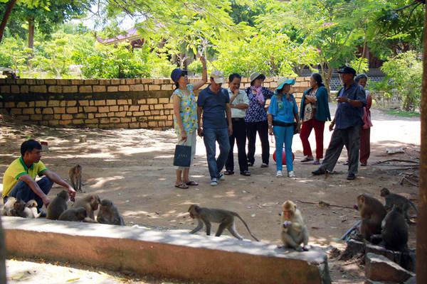 """Thiền viện cũng là nơi cư ngụ của bầy khỉ đuôi dài gần 200 con, được Tổ chức Kỷ lục Việt Nam xác lập kỷ lục """"Ngôi chùa có đàn khỉ thiên nhiên nhiều nhất"""". Vì vậy, Thiền viện Trúc lâm Chân Nguyên thường được người dân địa phương gọi là chùa Khỉ. Hàng ngày, đàn khỉ thường xuống núi ăn và vui đùa trong khuôn viên."""