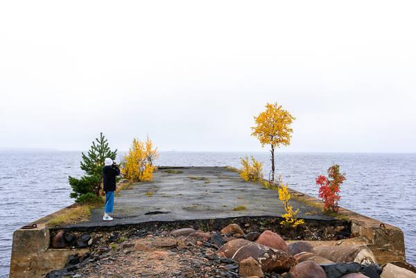 """Đến vùng núi phía Bắc mùa thu, bạn còn có cơ hội chiêm ngưỡng một """"đặc sản"""" của Phần Lan - những chú tuần lộc nhẩn nha ở bìa rừng hay trên cánh đồng để tìm ăn rêu Cladonia rangiferina - một loại rêu đặc biệt màu xám, trắng và nâu nhạt thường mọc thành thảm rộng, cao khoảng 10 cm. Đây là thức ăn quan trọng nhất của tuần lộc ở Phần Lan trong mùa lạnh. Ngoài ra, chúng ăn nấm và các loại quả mọng."""