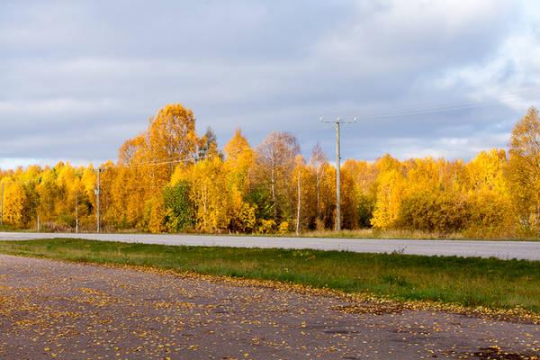 """Màu lá thu, hay """"ruska"""" theo cách gọi của người dân địa phương, là hiện tượng thiên nhiên ngoạn mục ở Phần Lan khi cảnh quan phía Bắc của đất nước thuộc bán đảo Scandinavia này được phủ các tông màu ấm rất sâu mà rất đỗi mềm mại."""