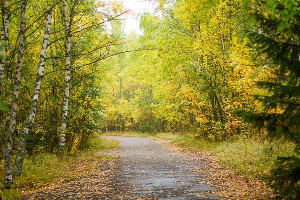 Ngoài cảnh sắc, khu vực Lapland còn là điểm đến hấp dẫn với nhiều người đam mê săn bắn vì nơi đây có những công viên tự nhiên và khu vực hoang dã lớn.