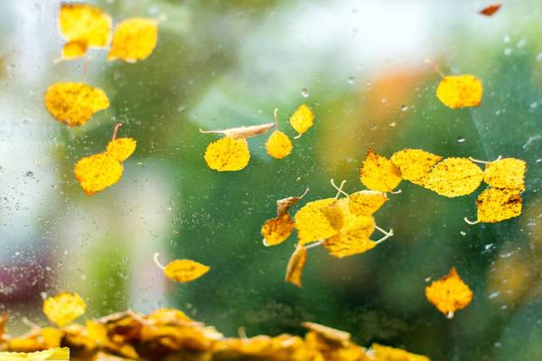 Mùa thu là quãng thời gian giao giữa hai mùa chính hè và đông, nhưng không vì thế mà kém quan trọng. Màu lá thu được xem như một sứ giả, cất lên lời tiễn biệt đầy sầu nhớ những ngày hè đầy nắng và nhắc nhở về mùa đông lạnh giá, tối tăm sắp đến.
