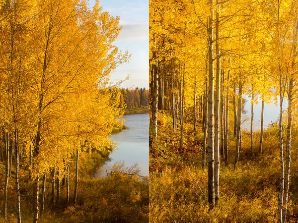Lá cây chuyển màu mật ong rực rỡ là thời điểm những người Phần Lan kéo thuyền lên bờ, cất xe đạp vào garage và rục rịch chuẩn bị dụng cụ trượt băng và trượt tuyết.
