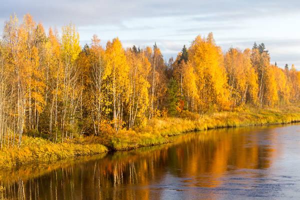 Tuy nhiên, khoảng thời gian cao điểm và ở độ rực rỡ nhất của những tán lá vàng (mùa ruska) chỉ kéo dài khoảng hai tuần và thay đổi theo từng năm. Các du khách và người yêu nhiếp ảnh thường lên kế hoạch cho chuyến đi vào khoảng nửa cuối tháng 9.