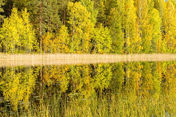 Bên cạnh màu lá vàng, sự đa dạng của cây lá rộng (bạch dương, du, sồi, phong...) và cây lá kim cũng như quả mọng và rêu trên mặt đất tạo nên những mảng màu xanh lá, nâu, xanh lam, đỏ và vàng sống động.