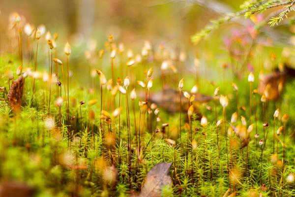 Không chỉ trong rừng, bên sông, những tán cây sắc màu của mùa thu Phần Lan cũng bao phủ dọc bờ biển vịnh Bothnia, thuộc biển Baltic.