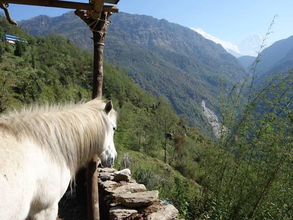 Ngựa bạch và đỉnh Annapurna south