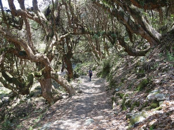 Một đoạn đường rừng